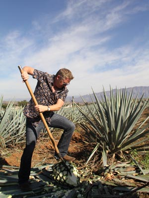In the agave fields.
